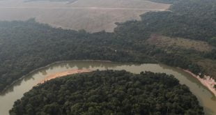 Penebangan hutan di Amazon Brazil meningkat buat pertama kalinya dalam