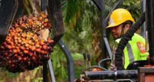 Sime Darby Plantation mencatatkan keuntungan bersih sebanyak RM190 juta pada